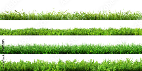 Poster Gras grass isolated