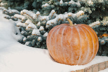 Ripe Pumpkin Lies On Snow On W...