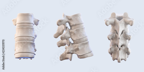 Fotografía  Human vertebrae anatomy