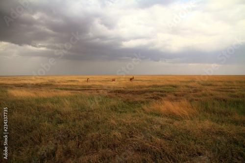 Serengeti Savannah and Jackson's Hartebeest Billede på lærred