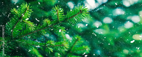 Fototapeta Green fir tree winter christmas background. Branches texture. Forest nature. Snow fall flakes obraz na płótnie