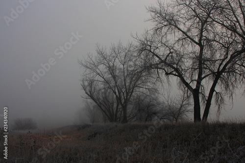 Spoed Foto op Canvas Grijze traf. tree in fog