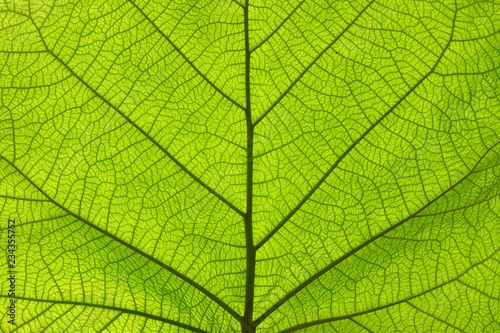 Fotografia  Extreme close up texture of green leaf veins