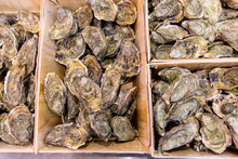 Chilean Oyster In Big Boxes