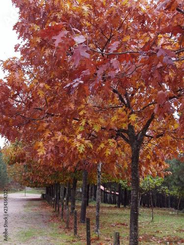 árboles otoñales de un precioso paseo