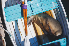 View Of A Sea Lion Seal Sleepi...