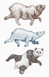 Wild animal jumping. Soaring brown and Polar bear and Giant panda. monochrome grizzly bear. Vintage style. Engraved hand drawn.