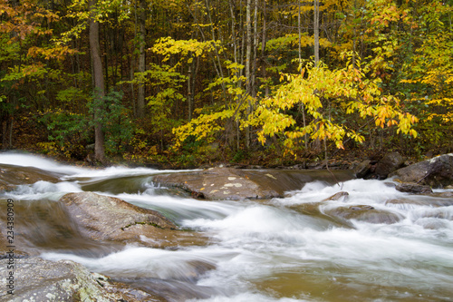 Tuinposter Fall Foliage, Colorful Forest Landscape Golden Yellow, Orange, Red LEaves