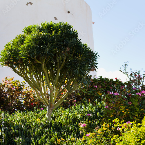 Fotografia  Beautiful Nature Spring Landscape of Canary Islands -  Gran Canaria