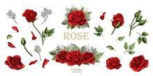 Red Roses Hand Drawn Illustrat...