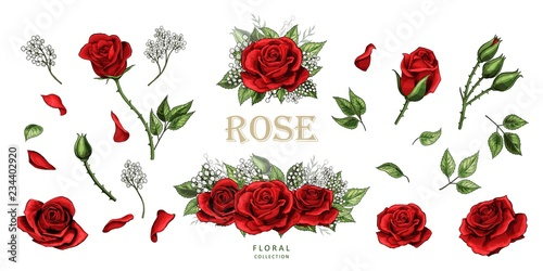 Photo  Red roses hand drawn illustration elements colored set