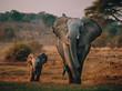 canvas print picture - Elefantenkuh mit Jungem auf dem Weg zum Wasserloch, Senyati Safari Camp, Botswana