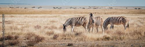 Zebras im Grasland, Etosha National Park, Namibia Fototapet