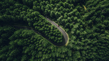 Aerial View Of Car Driving Through The Forest On Country Road, Madeira Island.