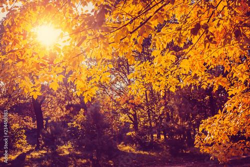 Montage in der Fensternische Honig Autumn nature landscape in sunny park