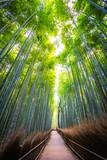 Fototapeta Na drzwi - Beautiful landscape of bamboo grove in the forest at Arashiyama kyoto