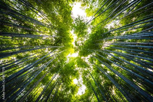 beautiful-landscape-of-bamboo-grove-in-the-forest-at-arashiyama-kyoto