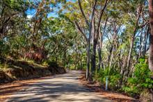 Curving Road Through Australian Bushland