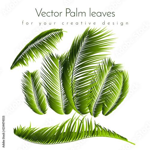 Αφίσα  Palm Leaves Isolated