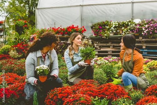 Florists working in greenhouse Fototapet