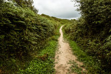 A Sheltered Footpath Through The Countryside, With Hedgerows And Bracken.