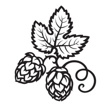 Hop Cones With Leaf Icon. Hand Drawn Vector Illustration.
