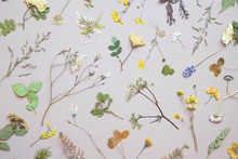 Various Dried Flowers And Leaves On Pastel Background. Flat Lay.