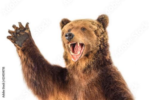 Fototapeta premium portret warczącego niedźwiedzia
