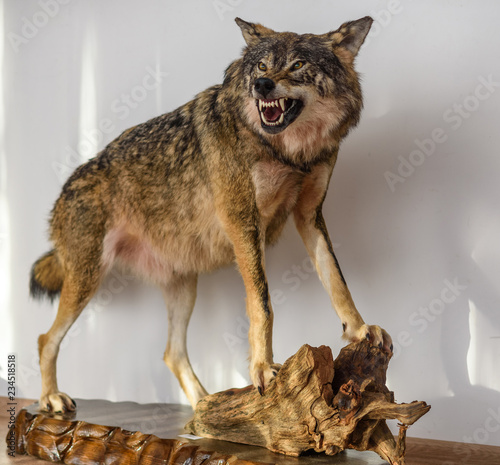 stuffed roaring wolf