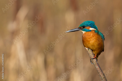 Photo  Martin pêcheur