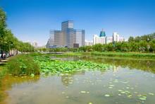 Parks Of Beijing. Park Near Ol...