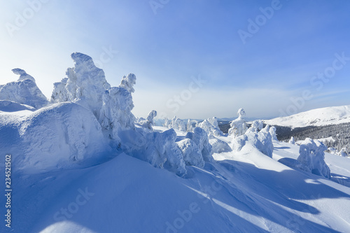 Fototapety, obrazy: High on the mountains, on the lawn stand trees covered with snow, which look as ice sculptures. Textured forms. Landscape in a winter cold day. Light shines in the snow.