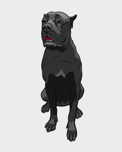 Cane Corso Dog - Isolated Vect...