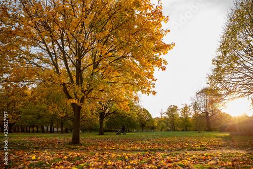 Foto op Canvas Herfst Beautiful autumn tree with fallen dry leaves