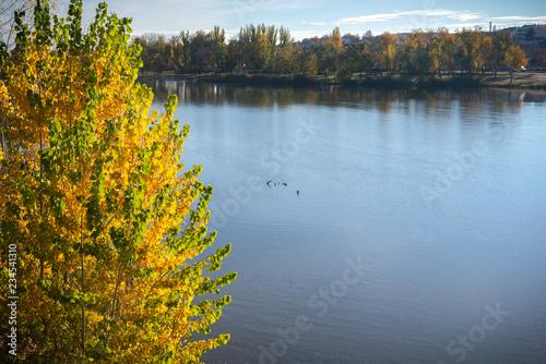 Spoed Foto op Canvas Blauwe hemel Camino en bosque de otoño. Paisaje de naturaleza. Caída de la hojas