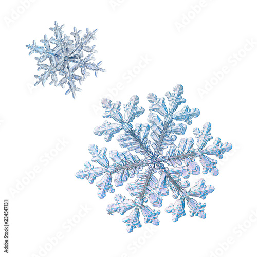 Fototapety, obrazy: Two snowflakes isolated on white background. Macro photo of real snow crystals: elegant stellar dendrites with complex shapes, fine hexagonal symmetry, glossy relief surface and thin, beautiful arms.