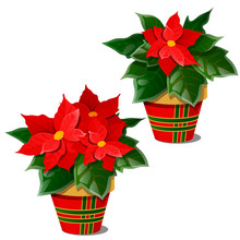 The Flowering Poinsettia Plants In Pots Isolated On White Background. A Traditional Symbol Of Christmas And New Year. Sample Of Poster, Invitation And Other Cards. Vector Cartoon Close-up Illustration