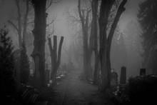 Fog In The Creepy Graveyard Of...
