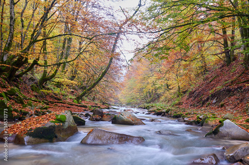 Fototapety, obrazy: River flowing through forest in the fall