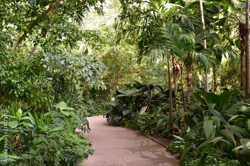 Fotografía  las tropikalny