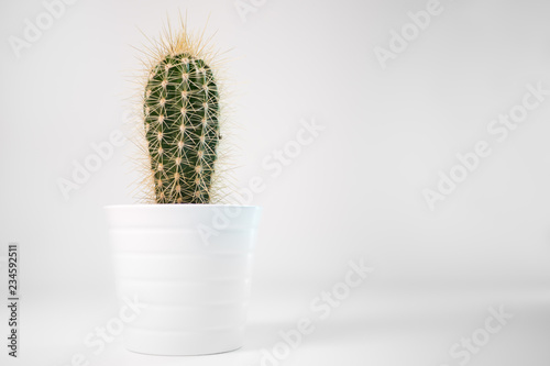 Spiky green cactus in a white pot on a minimalist white desk with white background and space to the right.