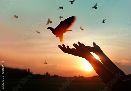Canvas Print - Woman praying and free the birds to nature on sunset background, hope concept