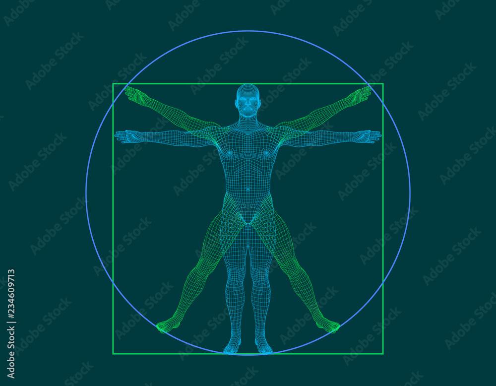 Fototapeta Vitruvian man. Wireframe human body. Vector outline illustration