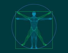 Vitruvian Man. Wireframe Human Body. Vector Outline Illustration