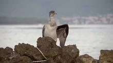Cormorant On The Rock Near The Water In Sea Bay (4)