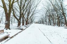 Snowed City Park. Winter Time. Christmas