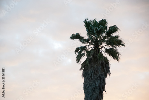 Foto op Plexiglas Palm boom silhouette palm tree