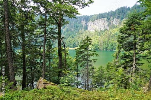 Fotografia feldsee im Schwarzwald beim Feldberg in Deutschland im Sommer
