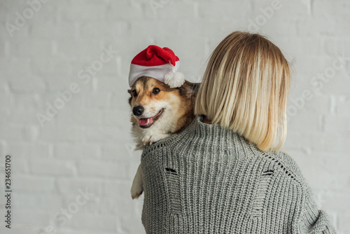 bd2fffa92b1 rear view of woman carrying adorable corgi dog in santa hat - Buy ...
