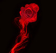 canvas print picture rose and swirl of red smoke isolated on black background